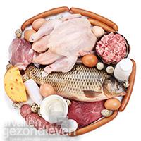 Afvallen-met-eiwitten